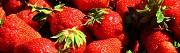 Сборщики ягоды и др. сельхозработы