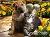 Ветеринар к Вам на дом