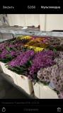 Работа и вакансии на цветочном производстве в Германии