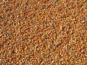 Кукуруза фуражная оптом от производителя.